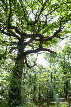 Magic tree - null