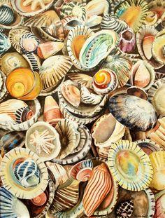 Classy Seashells, not tacky seashells haha