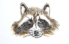 Racoons are not all that cute, really. Insects, Bee, Times, Animals, Honey Bees, Animales, Animaux, Bees, Animal