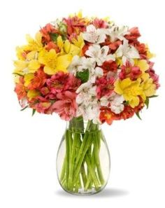 100 Blooms Assorted Peruvian Lilies With Vase