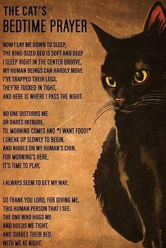 Pretty Cats, Beautiful Cats, Cute Cats, Funny Cats, Animals And Pets, Funny Animals, Cute Animals, Crazy Cat Lady, Crazy Cats