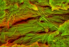 DDC-SEM of fossil - orange - 2.jpg