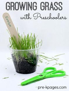 Preschool Science Growing Grass in a Cup – Pre-K Pages Plant and Grow Grass Seeds with Preschoolers. Growing Grass Seeds is a great science experiment for preschool or kindergarten kids. April Preschool, Preschool Garden, Preschool Themes, Preschool Crafts, Garden Kids, Garden Art, Kids Crafts, Seeds Preschool, Garden Theme