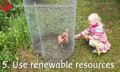 Permaculture principle 5. Use and Value Renewable Resources and Services   Our chickens do a lot of work for us, like preparing the soil for planting.