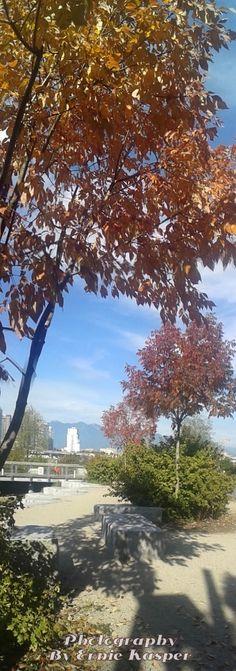 #fall #leaves #bc #vancouver #canada #falsecreek #beautiful