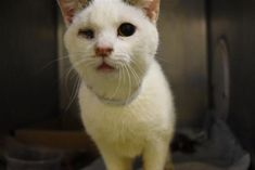 DEATH ROW CATS 2/26/18 !!! SHARE !!! 8 months old only, absolutely sweetest and most affectionate girl with kitty cold, PRAY and SHARE for her life, please