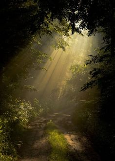 Nature Aesthetic, Aesthetic Photo, Forest Fairy, Magical Forest, Pretty Pictures, Aesthetic Pictures, Nature Photography, Travel Photography, Abstract Photography