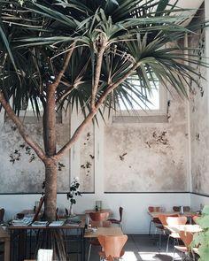 indoor greenery, cafe