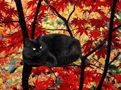 gatto nero colori autunno black cat