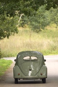 VW Bug split window