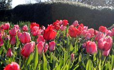 A flourish of color near the Great Lawn at the Atlanta Botanical Garden.