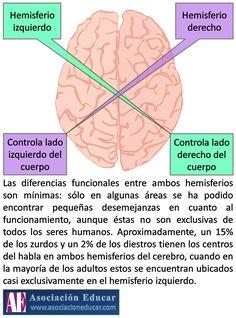 Infografía Neurociencias: Hemisferios cerebrales.   Asociación Educar