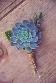 Echeveria Succulent Buttonhole by Lily & May Floral Design