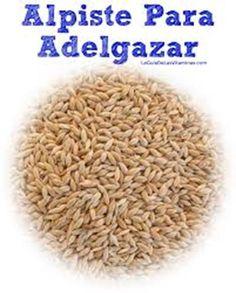 El alpiste es una semilla con un alto valor nutricional y sus efectos son muy beneficiosos sobre el organismo el alpiste para bajar de peso acelera el proceso d