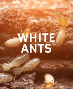 Ants, Movies, Movie Posters, Films, Ant, Film Poster, Cinema, Movie, Film