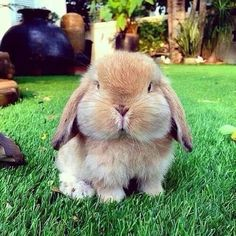 PetsLady's Pick: Cute Bunny Of The Day  ... see more at PetsLady.com ... The FUN site for Animal Lovers