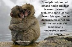 Inspiring wallpapers with inspiring thoughts Bubble Quotes, Afrikaanse Quotes, Missing You Quotes, Love Others, Funny Video Memes, Beautiful Mind, Cool Pets, Animal Quotes, Family Love