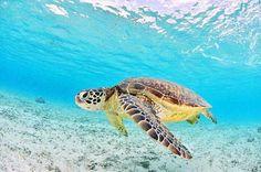 Mauritius, Maldives, Image Photography, Nature Photography, Ecuador, Turtle Love, Paradise On Earth, Ocean Themes, Animals Images