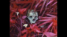 """El fotógrafo irlandés Richard Mosse recibió este año el prestigioso premio Deutsche Borse por su trabajo """"El enclave"""", expuesto en el pabellón de su país en la Bienal de Venecia. Lirios y restos, Congo oriental, 2012, Richard Mosse"""