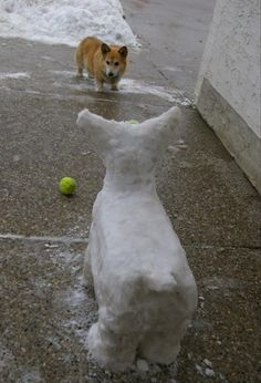 Funny Animal Pictures � 35 Pics