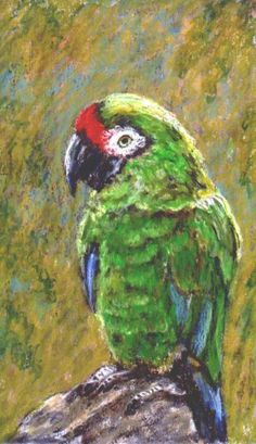 oil pastel art | Oil Pastel on  ********Because she had several pet birds...one at a time..mostly parakeets.