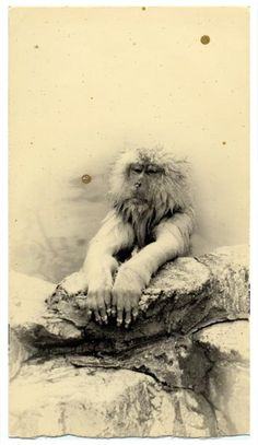 """Masao Yamamoto """"Nakazora"""" - Silver Gelatin Print - Signed and numbered in pencil verso. - Artist stamp with title in ink verso - Edition of 40 Yamamoto, Engraving Illustration, Baboon, Fine Art Photo, Weird World, Natural World, Photographic Prints, Installation Art, Black And White Photography"""