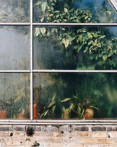 971 likes, 4 comments - There's just something about a fogged up greenhouse window, right? Thanks for sharing this one in