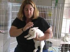 How to Give Your Rabbit All the Care He/She Needs - A Video by the Marin Humane Society