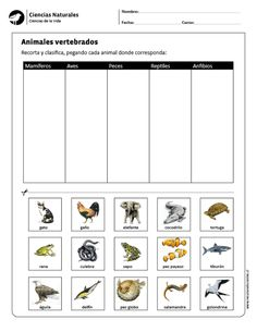 Visit the post for more. Vertebrates And Invertebrates, Elementary Science Classroom, Ludo, Spanish Worksheets, Bilingual Education, Summer School, Interactive Notebooks, Science And Nature, Teaching Resources