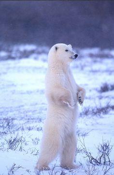 Polar Stance!!