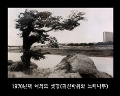 1970년대 여의도 샛강(귀신바위와 느티나무). 올림픽 대로변 여의도 샛 강가에 있는 큰바위 아래로 강물이 흘렀는데 수심이 깊어 이 곳에서 놀던 사람들이 주위풍경에 도취되어 실수로 물에 빠져 죽는 일이 많아 바위에 귀신이 붙었다고 하여 귀신바위라고 불렀다