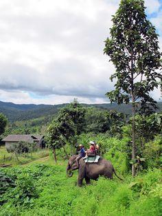 Paseando en elefante en #Tailandia ...