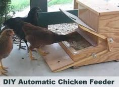 Image result for chicken self feeder plans