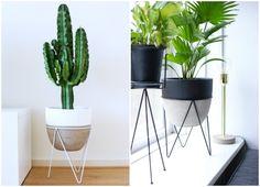 In dit artikel delen we onze nieuwe aankopen bij Intratuin, een plantenstandaard! Deze staan ontzettend leuk in je interieur.