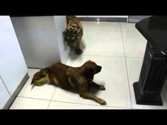 Very Funny Dog Guards Water Bowl