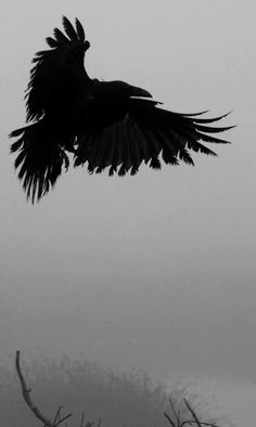 Detail of 'crow and hawk' by John Curley on flickr - original in color (click source link for very cool full photo :):