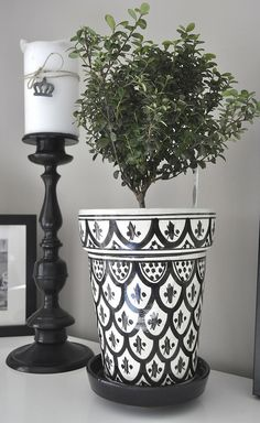 Myrsine in a pot from Rif Design.