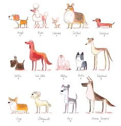 illustration louis thomas dogs collection.jpg - Louis THOMAS | Virginie