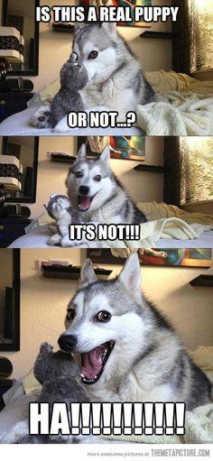 dog humor....