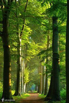.beautiful pathway through tall trees