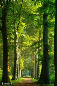 Tall trees, Netherlands