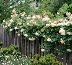 Grape Stake Fence w/ vines & flowers