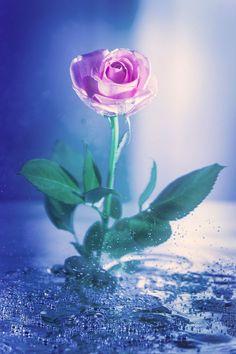 Breathtaking Beautiful Flower Photos • Photo Vide