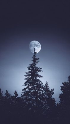 Imagen de moon, night, and nature