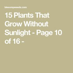 15 Plants That Grow Without Sunlight - Page 10 of 16 -