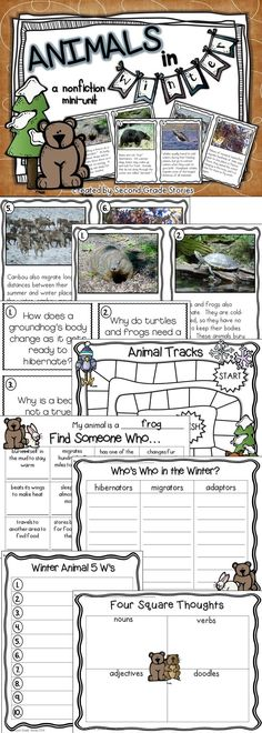 $ - full color informational photo cards to learn about animals in winter; fun review activities
