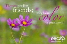 26 Best Friends Are Flowers Images Thoughts Words Inspiring Quotes