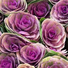 Composición floral F00546 Wifred Llimona - Detalle