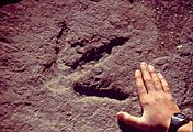 Tumbler Ridge Global Geopark Museum - See dinosaur tracks in east central British Columbia