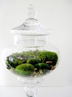 Another thing I'd like to do with the moss collection I seem to be developing...  A container from Salvation Army/Value World would be nice to start with; they always have a ton.
